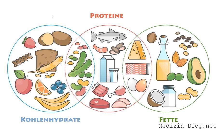Nährstoffe Kohlenhydrate Fette Proteine