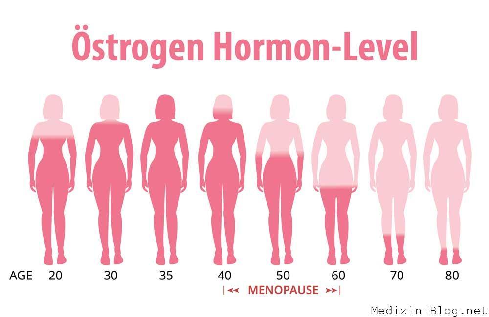 Östrogen Hormonlevel